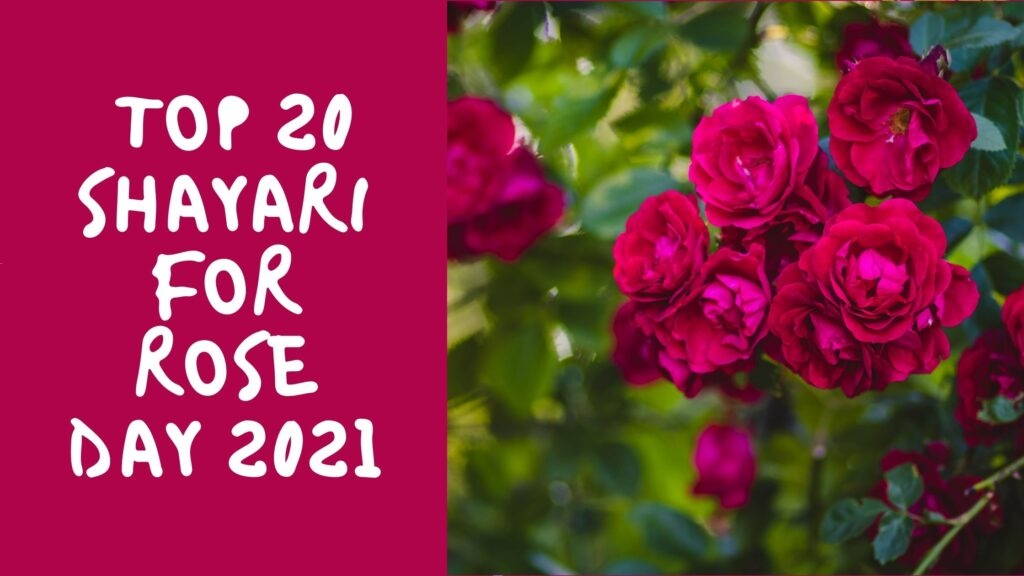 Rose Day Shayari - Top 20 Shayari For Rose Day 2021 (2)